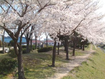 sakura.pngのサムネール画像